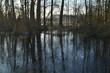 Reflectie van bomen op een bevroren vennetje in een natuurgebied bij de Kruisbergse bossen
