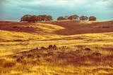 Black dragon like rocky stones hidden in rustic yellow orange dry grassy fields of Californian savanna hilly landscape at sunset.