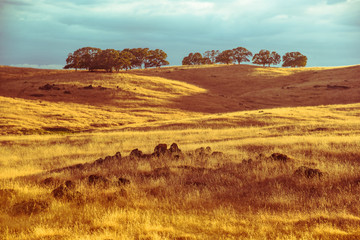 Black dragon like rocky stones hidden in rustic yellow orange dry grassy fields of Californian savanna hilly landscape at sunset. © kaelaimages