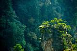 Trees on summit in Zhangjiajie chinese national park