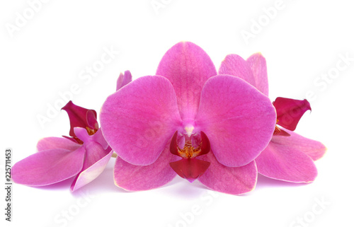 orchid © anphotos99
