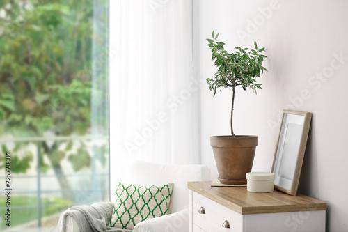 Leinwandbild Motiv Pot with olive tree in cozy interior. Space for text