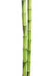 Leinwanddruck Bild - Beautiful green bamboo stems on white background