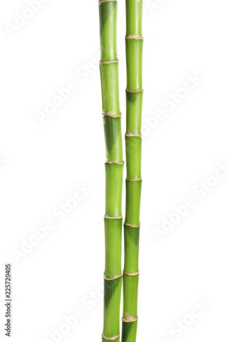 Leinwanddruck Bild Beautiful green bamboo stems on white background