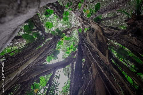 Foto Murales  under jungle tree in  rainforest / tropical forest