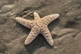 Wunderschöner Seestern am Strand  - 225776289