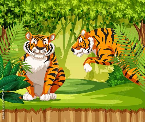 Fototapeta Tigers in the jungle