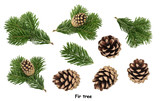 Fir tree isolated on white background - 225812274
