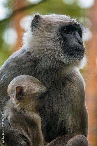 Fototapeta Baby Monkey