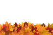 Colorful autumn maple leafs isolated on a white
