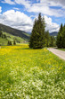 Landscape with field of dandelions and mountains - 225878899