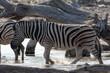Africa: Namibia etosha