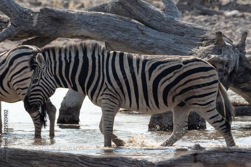 Africa: Namibia etosha - 225920402