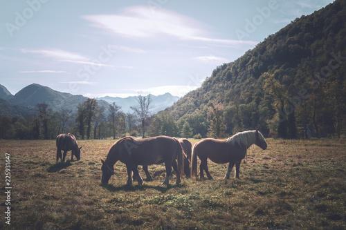 chevaux au pied des montagnes