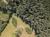 Forest seen from above.  Beautiful drone landscape.