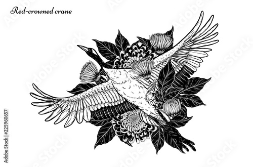 Red Crowned Crane With Chrysanthemum Vector By Hand Drawing