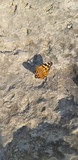 butterfly on a stone