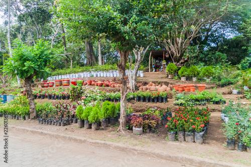 Garden centre in Catarina village near Laguna de Apoyo lake, Nicaragua