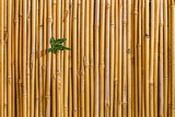 green bamboo on wooden background