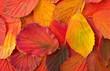 Leinwandbild Motiv Herbstblätter