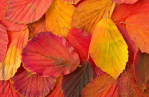 Leinwanddruck Bild Herbstblätter