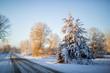 Winter Trees 30