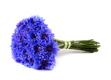 Blue cornflower bouquet isolated on white background - 226099023