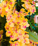 Floral background with yellow and purple blooming orchids
