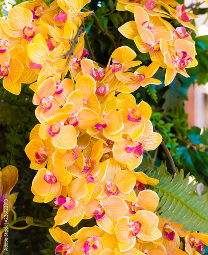 Floral background with yellow and purple blooming orchids - 226122013