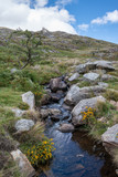 Stunning landscape image of countryside around Llyn Ogwen in Snowdonia during early Autumn - 226170469