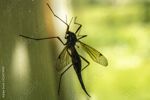 insect - 226179440