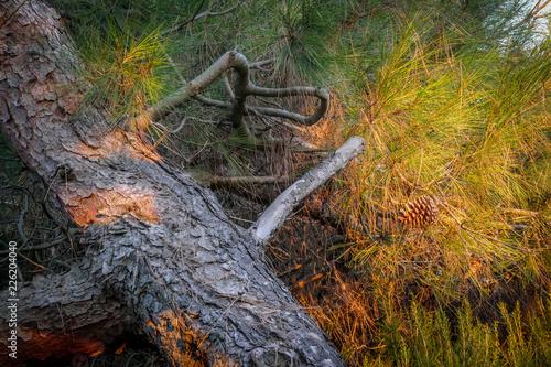 Foto Murales Sonnenlicht im Wald