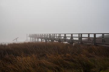Steg im Nebel umgeben von Schilf