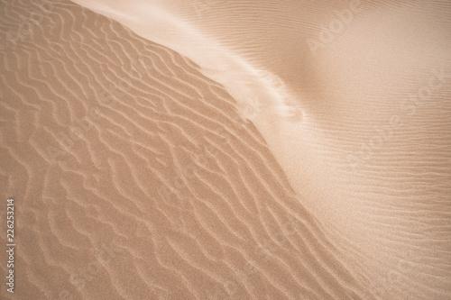 Golden dune of Punta del Fangar, Delta Ebro, Terres de l'Ebre, Tarragona, Catalonia © Purpurink