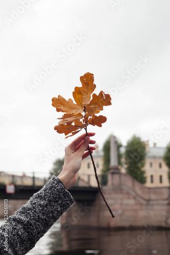 Foto Murales Autumn leaf. Season autumn