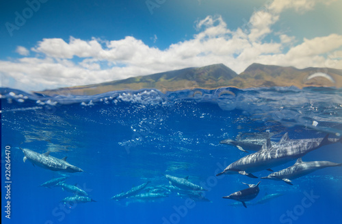 Doplphins and the west Maui Mountains