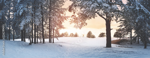 Foto Murales Pine trees covered with snow on frosty evening. Beautiful winter panorama