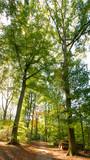 Spaziergang im Wald - sehr hohe Bäume in Viersen-Süchteln, Wald im Sommer - 226292267