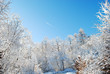 winter landscape with trees and blue sky