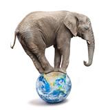 African elephant - Loxodonta africana balancing on a blue planet or globe. Ecology metaphor. - 226320071