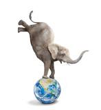 African elephant - Loxodonta africana balancing on a blue planet or globe. Ecology metaphor. - 226320093