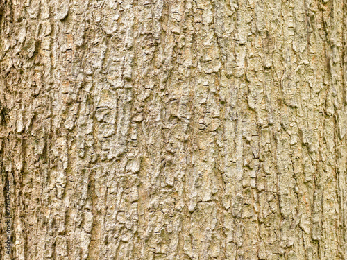 Tree bark wood texture abstract background - 226342444