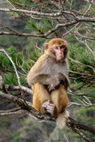 A adult monkey is sitting on a bough