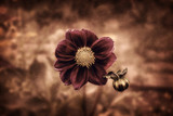 flower background in vintage style - 226367064