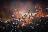 flower background in vintage style - 226367461