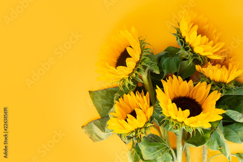 Leinwanddruck Bild Sunflower fresh flowers on yellow background with copy space