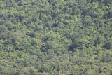 Aerial view green forest. Top view forest texture background.