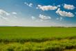 A field in Saskatchewan, Canada in summer under a blue sky with light, puffy clouds.