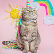 Cat unicorn on a pink background in a suit. Rainbow horn, cute kitten look, skill, tenderness, love, fairytale and love for cats