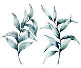 Watercolor silver eucalyptus set. Hand painted seeded eucalyptus branch with leaves isolated on white background. Floral illustration for design, print, fabric or background. - 226404859